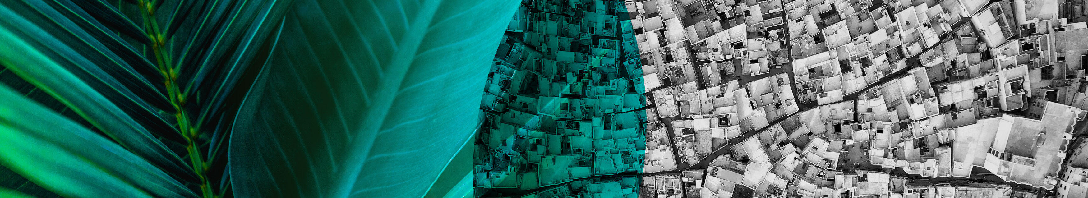 The banner across the top of the page shows a close up of palm leaves, overlapping with a aerial shot of a slum. As they overlap, they are very beautiful, and remind us of the connectedness between nature and humans, and how everything we do affects the balance.