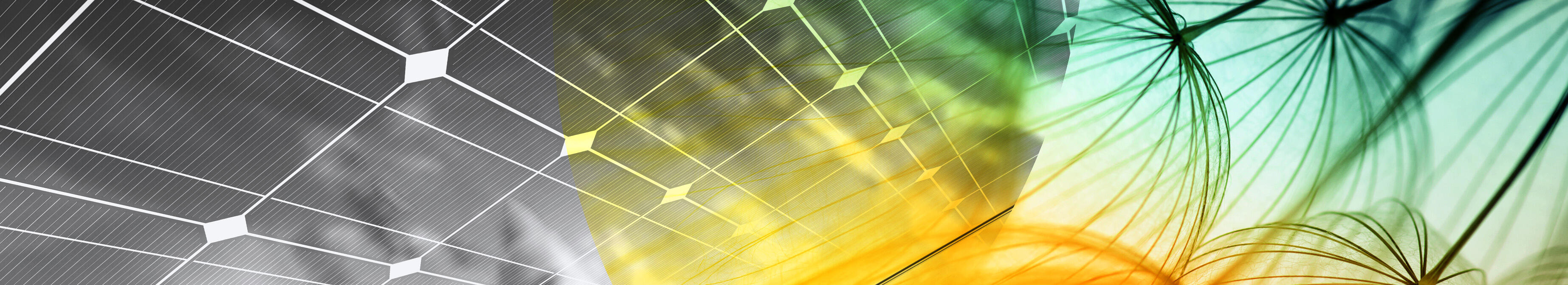 Image of solar panels overlaid with plants